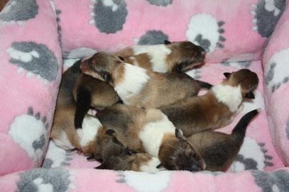 Die Kleinen 2 Tage alt :-)