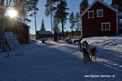 """Gäste mit ihren Hundeschlitten vor unserem Haus """"Carl Larsson"""""""