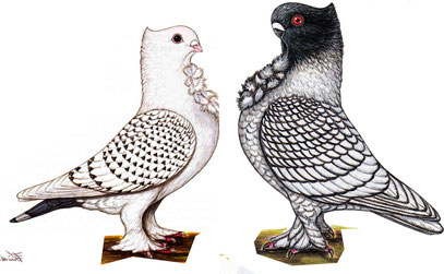 Im Vergleich: links Altorientalisches Mövchen , rechts modernes Orientalisches Mövchen