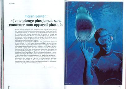 Requin plongeur bien public Dijon