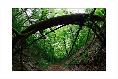 Florian Bernier Val Suzon concours photo combe de la mairie arbre mort