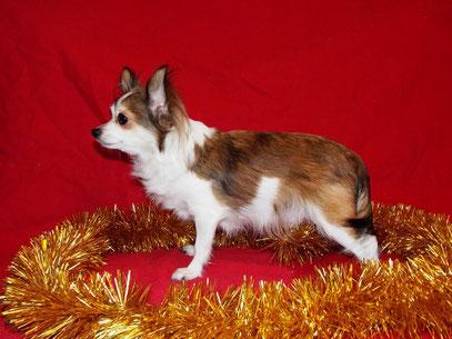 Мать щенят-Ред Бурбон Желанная Жюли Жасмин