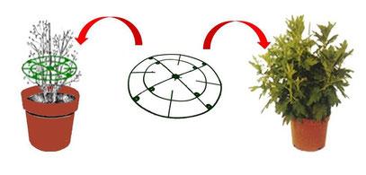 cercle pour tuteurer, autoturage, tuteurage, autoturages, tuteurages, auto-tuteurage, auto-tuteurages, tuteurage pour chrysanthèmes, tuteurages pour chrysanthèmes, tuteurage pour chrysanthemes, tuteurages pour chrysanthemes, tuteurage chrysanthèmes, tuteu
