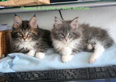 ab und zu sind sie mal Computerkatzen