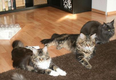 Anouk, Lenny und Romeo