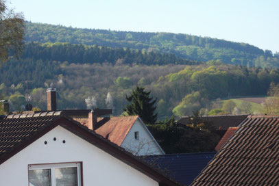 Hintergrund, Schwarzwald