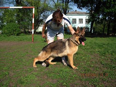Россия Штольц Фатерланд,8 мес(Кевин Нико-Тьюб-Германика фон Нордэн)