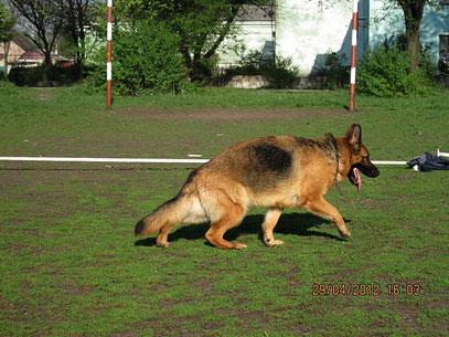 Зондеркоманда фон Нордэн(Ярант фон Нордэн-Шанта фон Нордэн),1 год 10 мес, 09.05.12.