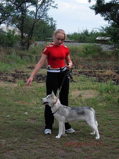 сибирская хаски Живая Легенда(Хася)- наша с Региной подопечная по хэндлингу