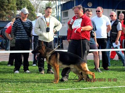 Видо ф.Хаус Галли--поб-ль открытого кл.коб. из 7 собак