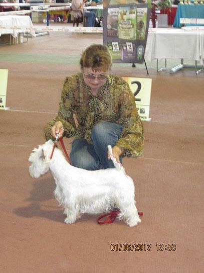 вест хайленд вайт терьер Гиатрис (Луна) на международной выставке собак