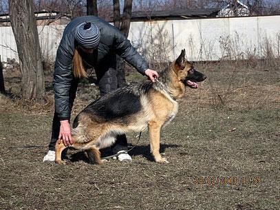Полет Остлих Аусваль,7 мес(Харлей Форстхаус Райс+Шенди фон Нордэн),28.02.13.