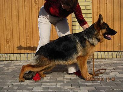 Роллекс Штольц Фатерланд(Кевин Нико-Тьюб-Германика фон Нордэн),7 мес