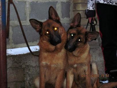 Кампина (слева) и Кантри (справа) фон нордэн-Штэрн, 10 мес