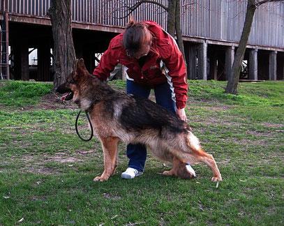 Кевин Нико-Тьюб,10 мес(Emilio von Santamar-Ями Украиниан Ланд)