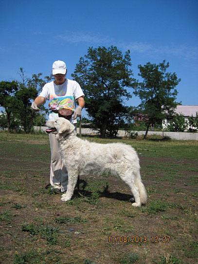 Я на занятиях с мареммано-абруцкой овчаркой