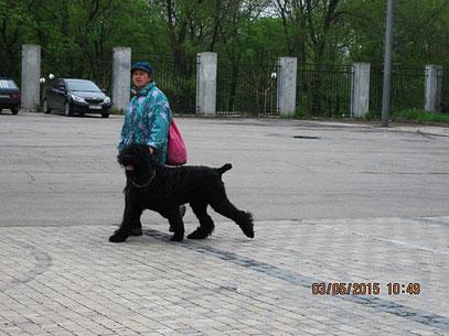 Витченко Виктория с черным терьером- призером Бэст ин шоу