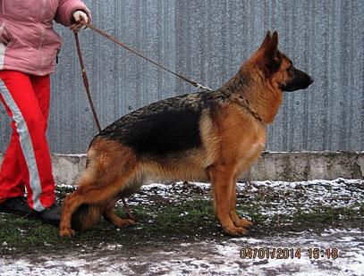 Кампина фон Нордэн-Штэрн, 10 мес