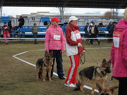 Мы в ринге с суками щенками-Россия и Рюнай Штольц Фатерланд