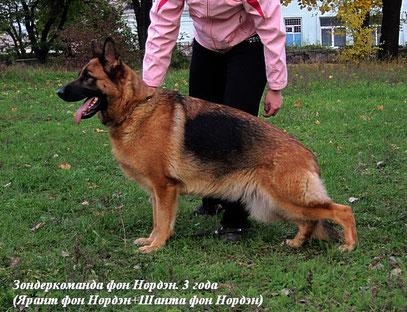 Зондеркоманда фон Нордэн, 3 года
