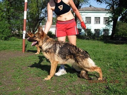 Рюнай Штольц Фатерланд(Кевин Нико-Тьюб-Германика фон Нордэн),7.5 мес