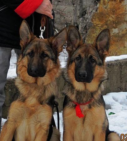 Рюнай(слева) и Россия(справа) Штольц Фатерланд,5мес10 дней