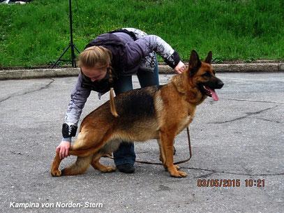 Лучшая собака выставки- немецкая овчарка Кампина фон Нордэн- Штэрн