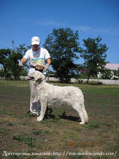 мареммано-абруцкая овчарка-Аргентина
