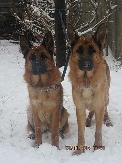 Кампина (слева) и Кантри (справа) фон Нордэн-Штэрн, 1г 8м
