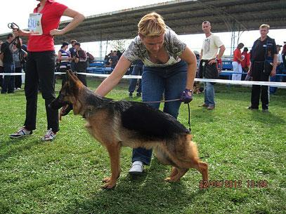 Барселона фон Хаус Шлессер(Остен Штерн Зикхайс-Нирвана фом Хаус Шлоссер)-3БП в кл.подростков сук из 22 собак.Очень приятная,понравилась.