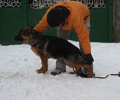 Роллекс Штольц Фатерланд(Кевин Нико-Тьюб-Германика фон Нордэн),5 мес