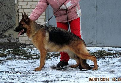 Кантри фон нордэн-Штэрн, 10 мес