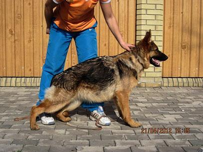 Рюнай Штольц Фатерланд(Кевин Нико-Тьюб-Германика фон Нордэн),7 мес