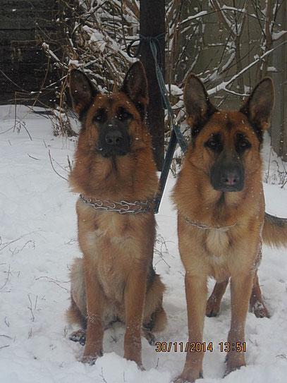 Кампина (слева) и Кантри (справа)