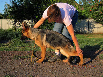 Кантри фон Нордэн-Штэрн, 4,5 мес