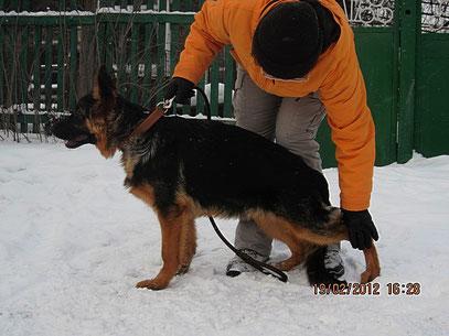 Рамблер Штольц Фатерланд(Кевин Нико-Тьюб-Германика фон Нордэн),5 мес
