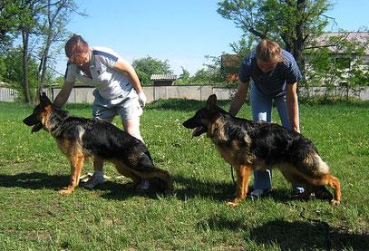 Рейх(слева) и Роллекс Штольц Фатерланд(Кевин Нико-Тьюб-Германика фон Нордэн),7,5 мес