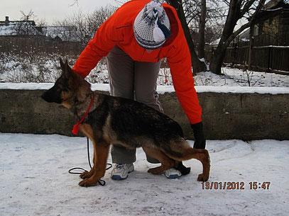 Россия Штольц Фатерланд, 4 мес