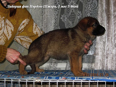 Либерия фон Нордэн-Штэрн, 1 мес 5 дней (Яррас фон Нордэн+Россия Штольц Фатерланд)