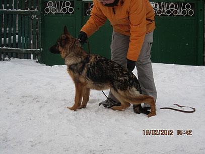 Рюнай Штольц Фатерланд(Кевин Нико-Тьюб-Германика фон Нордэн),5 мес