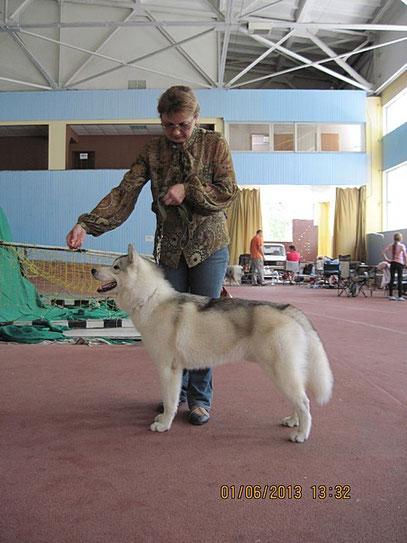 сибирский хаски Викинг на международной выставке- победитель класса щенков