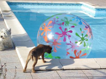 """Lola à la piscine , joue au """" prisonnier """""""