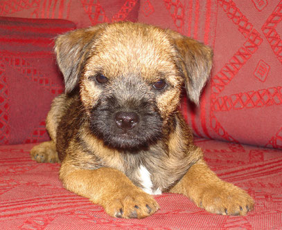 Lola ( 3 - 4 mois )