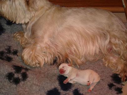 Petit bouchon qui vient de naître !