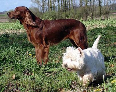 Neïss ( la rouge ) et Padishah ( la blanche )