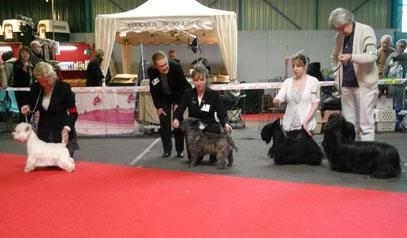 Pour le meilleur Terrier d'écosse : Le Westie