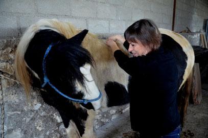 Une séance de shiatsu est toujours  un dialogue avec le cheval. Il est notre guide.