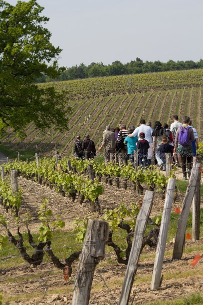 balade-randonnee-visite-guidee-vignoble-cave-troglo-degustation-vins-Vouvray-Touraine-Tours-Vallee-Loire-Rendez-Vous-dans-les-Vignes-Myriam-Fouasse-Robert