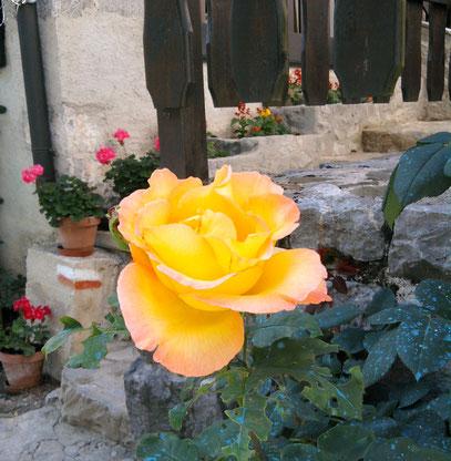 Eine gelbe Rose als Symbol für einen perfekten Text.