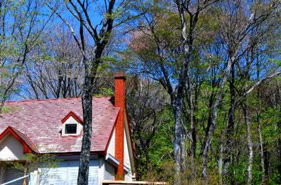 白樺と赤い屋根と青い空  撮影 By 白鳥保美